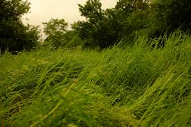 flowgrass